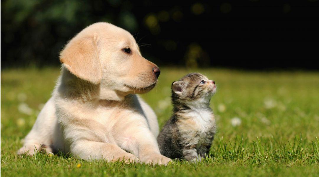 Mes animaux avant tout !